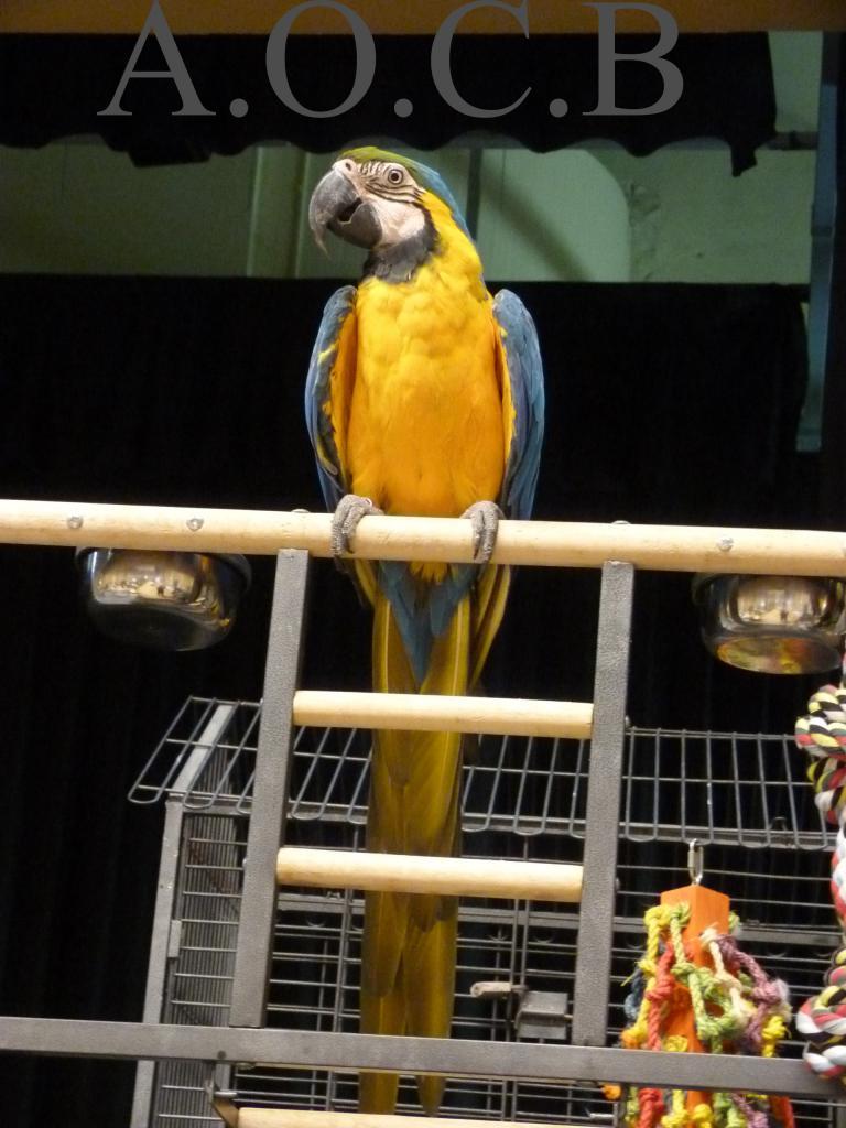 Foire aux oiseaux du 3/4 mai 2014