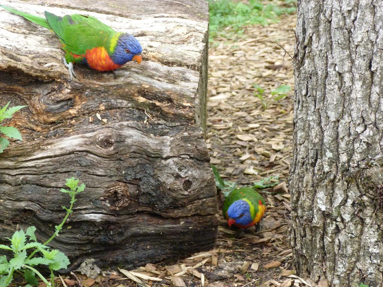 Parc des oiseaux de Villars les Dombes 02-09-2012 (95)
