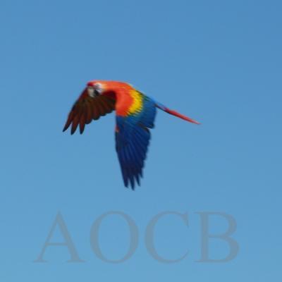 les sorties de l' A.O.C.B